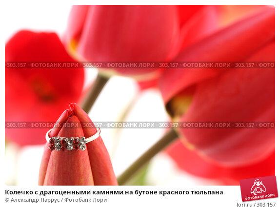 Колечко с драгоценными камнями на бутоне красного тюльпана, фото № 303157, снято 21 апреля 2008 г. (c) Александр Паррус / Фотобанк Лори