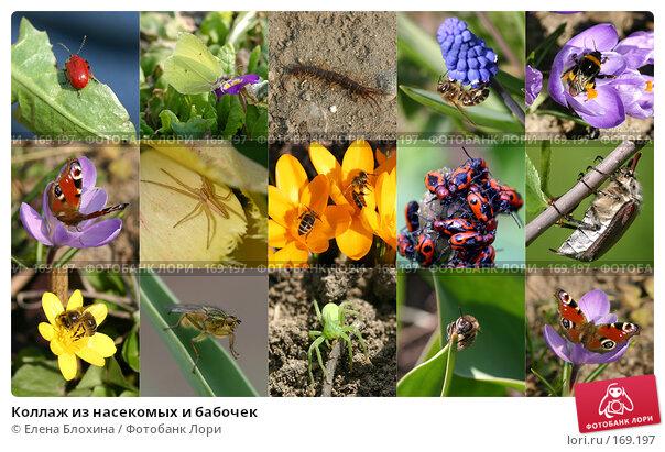 Купить «Коллаж из насекомых и бабочек», фото № 169197, снято 19 апреля 2018 г. (c) Елена Блохина / Фотобанк Лори