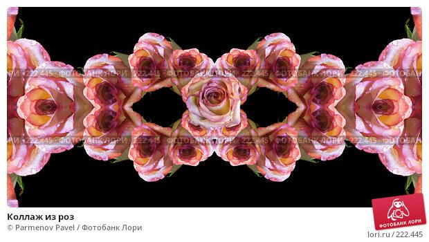 Купить «Коллаж из роз», иллюстрация № 222445 (c) Parmenov Pavel / Фотобанк Лори