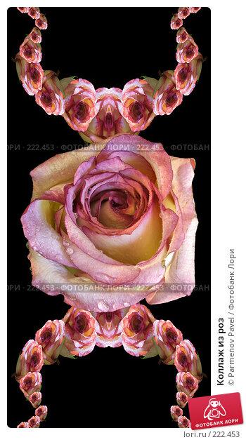 Коллаж из роз, иллюстрация № 222453 (c) Parmenov Pavel / Фотобанк Лори