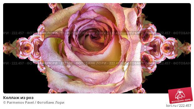 Коллаж из роз, иллюстрация № 222457 (c) Parmenov Pavel / Фотобанк Лори