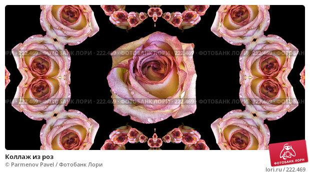 Коллаж из роз, иллюстрация № 222469 (c) Parmenov Pavel / Фотобанк Лори