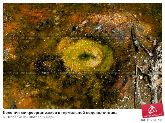 Колония микроорганизмов в термальной воде источника, фото № 31733, снято 7 января 2007 г. (c) Eleanor Wilks / Фотобанк Лори