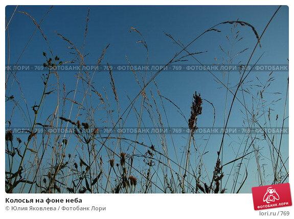 Колосья на фоне неба, фото № 769, снято 5 августа 2005 г. (c) Юлия Яковлева / Фотобанк Лори