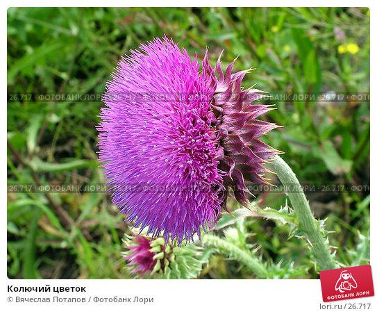 Колючий цветок, фото № 26717, снято 10 июля 2004 г. (c) Вячеслав Потапов / Фотобанк Лори