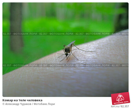 Комар на теле человека, фото № 82357, снято 12 июня 2006 г. (c) Александр Чураков / Фотобанк Лори