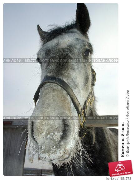 Купить «Комичный конь», фото № 183773, снято 19 января 2008 г. (c) Дмитрий Лемешко / Фотобанк Лори