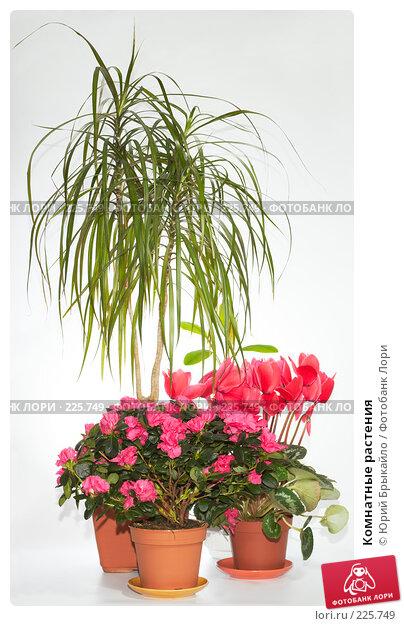 Купить «Комнатные растения», фото № 225749, снято 20 апреля 2018 г. (c) Юрий Брыкайло / Фотобанк Лори