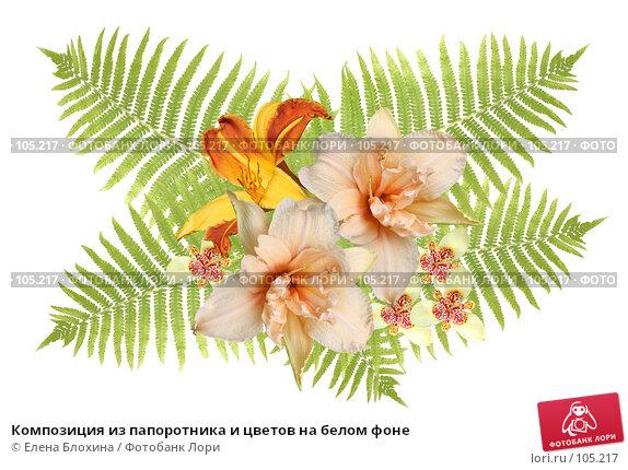 Композиция из папоротника и цветов на белом фоне, фото № 105217, снято 20 февраля 2017 г. (c) Елена Блохина / Фотобанк Лори