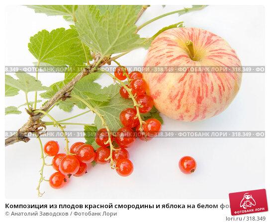 Композиция из плодов красной смородины и яблока на белом фоне, фото № 318349, снято 12 августа 2006 г. (c) Анатолий Заводсков / Фотобанк Лори