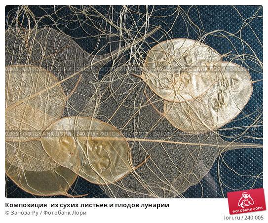 Купить «Композиция  из сухих листьев и плодов лунарии», фото № 240005, снято 29 марта 2008 г. (c) Заноза-Ру / Фотобанк Лори