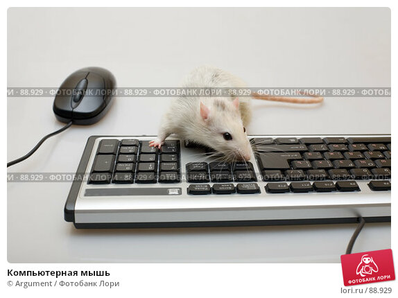 Компьютерная мышь, фото № 88929, снято 7 сентября 2007 г. (c) Argument / Фотобанк Лори