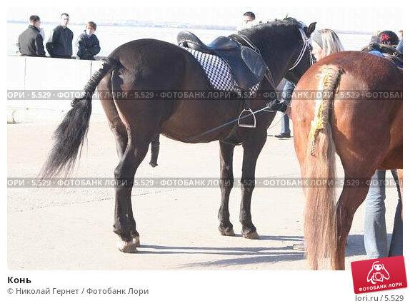 Конь , фото № 5529, снято 30 апреля 2006 г. (c) Николай Гернет / Фотобанк Лори