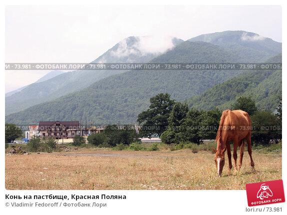 Конь на пастбище, Красная Поляна, фото № 73981, снято 2 августа 2007 г. (c) Vladimir Fedoroff / Фотобанк Лори