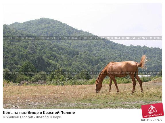 Купить «Конь на пастбище в Красной Поляне», фото № 73977, снято 2 августа 2007 г. (c) Vladimir Fedoroff / Фотобанк Лори