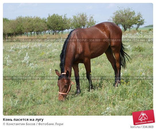 Конь пасется на лугу, фото № 334869, снято 28 октября 2016 г. (c) Константин Босов / Фотобанк Лори