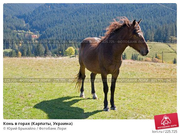 Конь в горах (Карпаты, Украина), фото № 225725, снято 29 сентября 2007 г. (c) Юрий Брыкайло / Фотобанк Лори