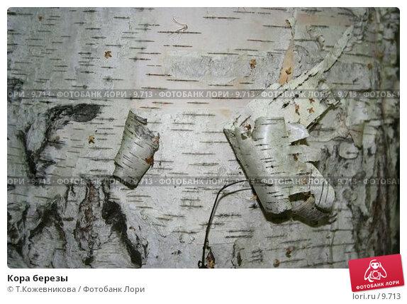 Кора березы, фото № 9713, снято 27 февраля 2017 г. (c) Т.Кожевникова / Фотобанк Лори