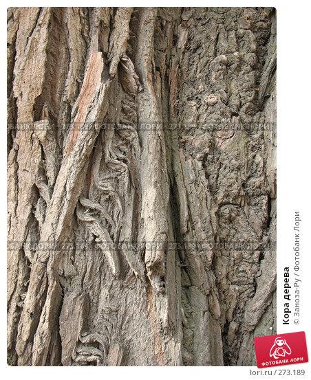 Кора дерева, фото № 273189, снято 1 мая 2008 г. (c) Заноза-Ру / Фотобанк Лори