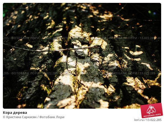 Кора дерева. Стоковое фото, фотограф Кристина Саркисян / Фотобанк Лори