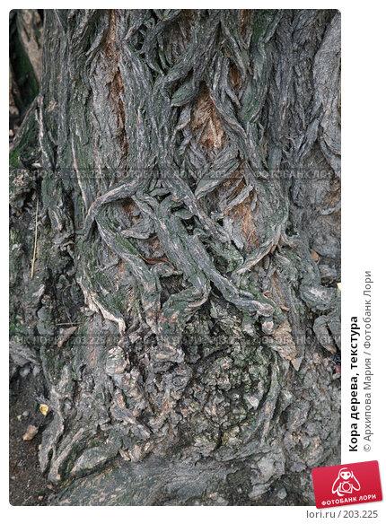 Купить «Кора дерева, текстура», фото № 203225, снято 29 сентября 2007 г. (c) Архипова Мария / Фотобанк Лори
