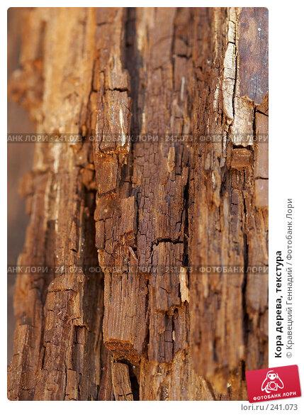Купить «Кора дерева, текстура», фото № 241073, снято 21 апреля 2018 г. (c) Кравецкий Геннадий / Фотобанк Лори