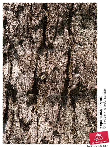 Кора пальмы. Фон, фото № 304817, снято 31 мая 2008 г. (c) Игорь Р / Фотобанк Лори