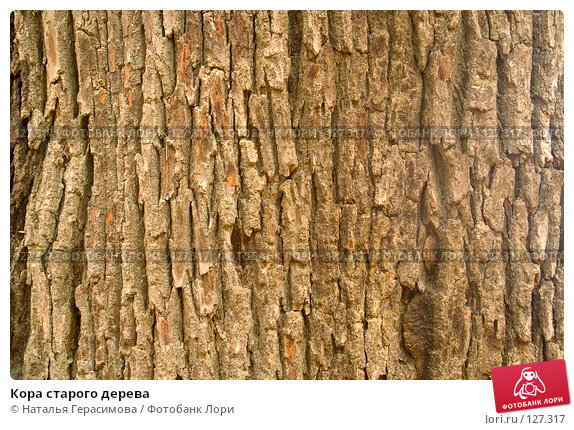 Кора старого дерева, фото № 127317, снято 27 октября 2007 г. (c) Наталья Герасимова / Фотобанк Лори