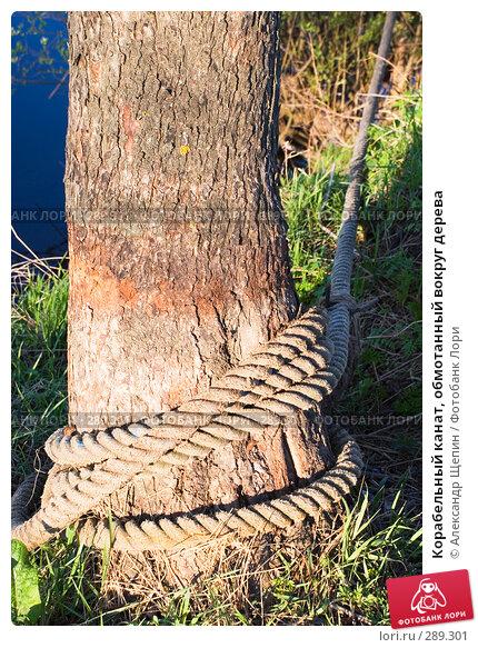 Корабельный канат, обмотанный вокруг дерева, эксклюзивное фото № 289301, снято 15 мая 2008 г. (c) Александр Щепин / Фотобанк Лори
