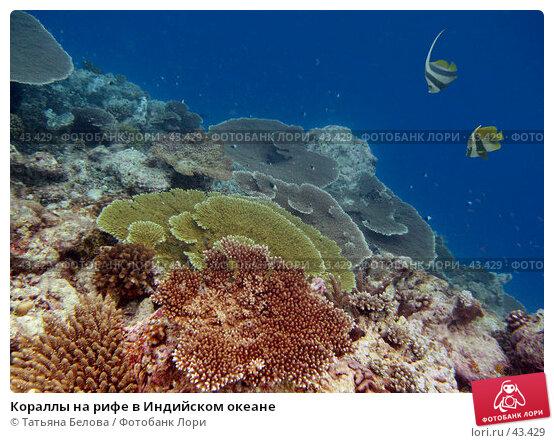 Кораллы на рифе в Индийском океане, эксклюзивное фото № 43429, снято 26 ноября 2006 г. (c) Татьяна Белова / Фотобанк Лори