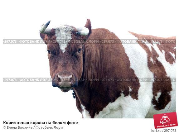 Купить «Коричневая корова на белом фоне», фото № 297073, снято 21 мая 2008 г. (c) Елена Блохина / Фотобанк Лори