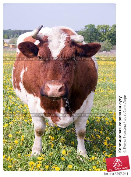 Коричневая корова на лугу, фото № 297041, снято 19 мая 2008 г. (c) Елена Блохина / Фотобанк Лори
