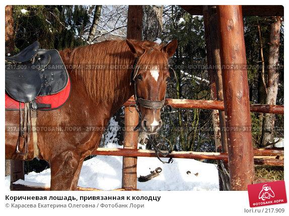 Купить «Коричневая лошадь, привязанная к колодцу», фото № 217909, снято 3 февраля 2008 г. (c) Карасева Екатерина Олеговна / Фотобанк Лори