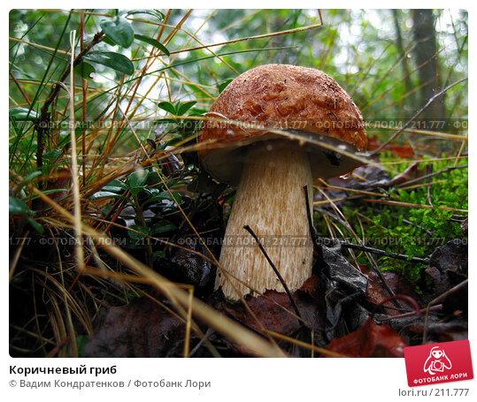 Коричневый гриб, фото № 211777, снято 28 октября 2016 г. (c) Вадим Кондратенков / Фотобанк Лори
