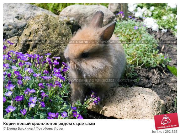 Коричневый крольчонок рядом с цветами, фото № 292525, снято 20 мая 2008 г. (c) Елена Блохина / Фотобанк Лори