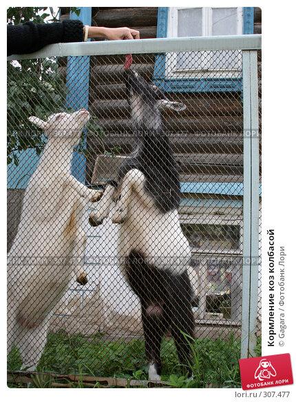 Кормление коз колбасой, фото № 307477, снято 22 июля 2006 г. (c) Gagara / Фотобанк Лори
