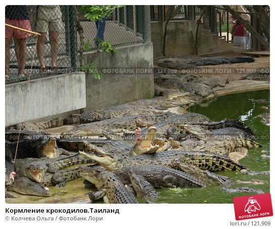 Кормление крокодилов.Таиланд, фото № 121909, снято 25 марта 2007 г. (c) Колчева Ольга / Фотобанк Лори