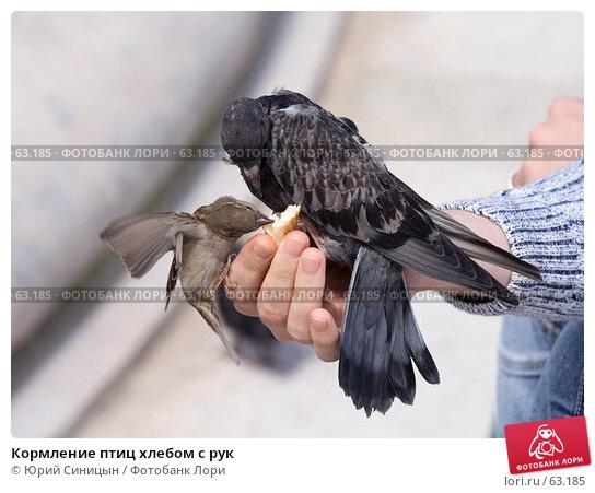 Кормление птиц хлебом с рук, фото № 63185, снято 23 июня 2007 г. (c) Юрий Синицын / Фотобанк Лори