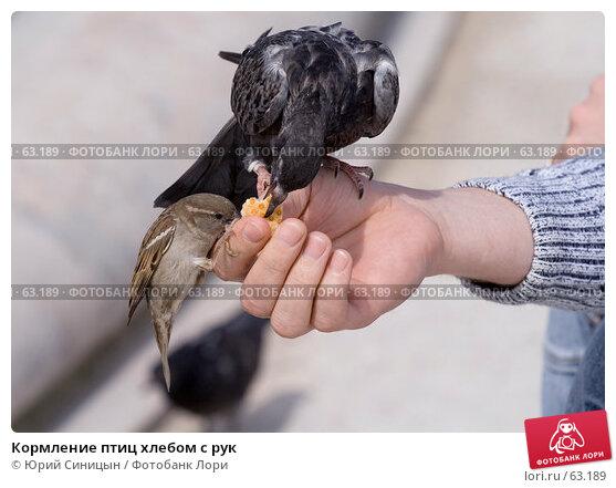 Кормление птиц хлебом с рук, фото № 63189, снято 23 июня 2007 г. (c) Юрий Синицын / Фотобанк Лори
