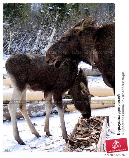 Кормушка для лосей, фото № 128769, снято 6 марта 2004 г. (c) Ярослава Синицына / Фотобанк Лори
