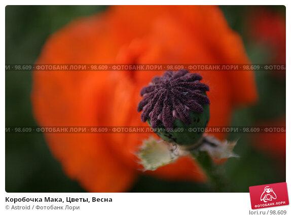 Коробочка Мака, Цветы, Весна, фото № 98609, снято 11 июня 2005 г. (c) Astroid / Фотобанк Лори