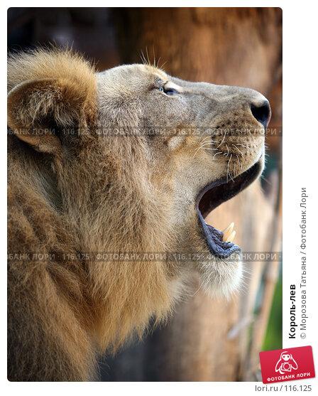 Король-лев, фото № 116125, снято 23 октября 2007 г. (c) Морозова Татьяна / Фотобанк Лори