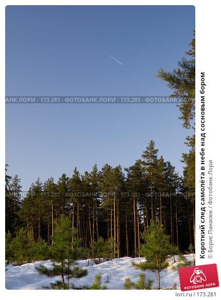 Короткий след самолёта в небе над сосновым бором, фото № 173281, снято 2 января 2008 г. (c) Борис Панасюк / Фотобанк Лори