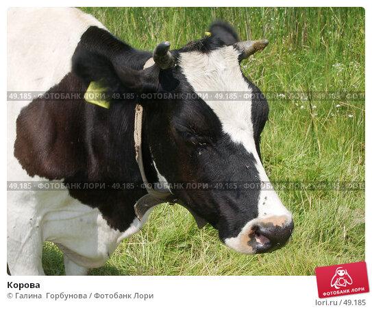 Купить «Корова», фото № 49185, снято 9 июля 2004 г. (c) Галина  Горбунова / Фотобанк Лори