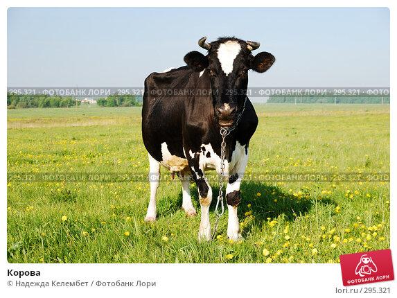 Купить «Корова», фото № 295321, снято 18 мая 2008 г. (c) Надежда Келембет / Фотобанк Лори