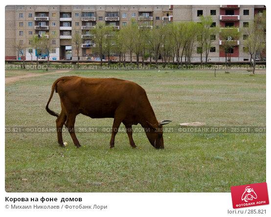 Корова на фоне  домов, фото № 285821, снято 14 мая 2008 г. (c) Михаил Николаев / Фотобанк Лори