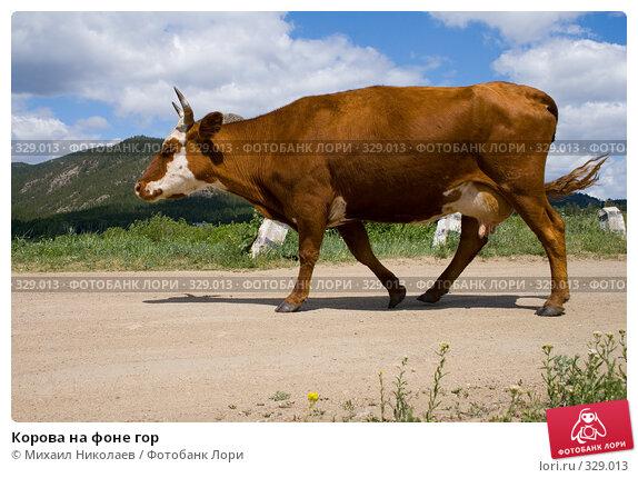 Корова на фоне гор, фото № 329013, снято 19 июня 2008 г. (c) Михаил Николаев / Фотобанк Лори