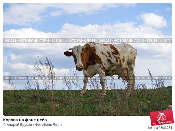 Купить «Корова на фоне неба», фото № 308281, снято 23 апреля 2018 г. (c) Андрей Брусов / Фотобанк Лори