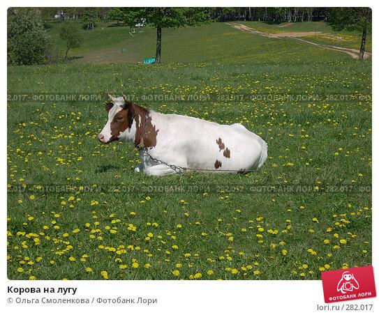 Корова на лугу, фото № 282017, снято 12 мая 2008 г. (c) Ольга Смоленкова / Фотобанк Лори