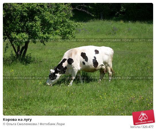 Корова на лугу, фото № 320477, снято 7 июня 2008 г. (c) Ольга Смоленкова / Фотобанк Лори